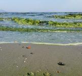 Vitalfood Fytoplankton